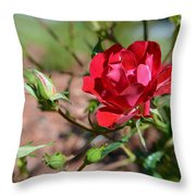 Red Rose And Buds Throw Pillow
