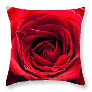 Red Rose Colour Isolated On A Green Background. Throw Pillow