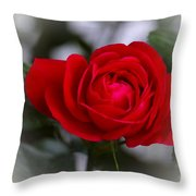 Red Rose Throw Pillow by Issabild -
