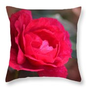 Red Rose Of May Throw Pillow