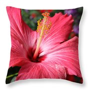Red Rose Of Sharon  Throw Pillow