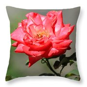 Red Rose On A Bush Throw Pillow