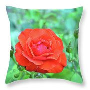 Red Rose On Natural Background With Green Leaves. Throw Pillow