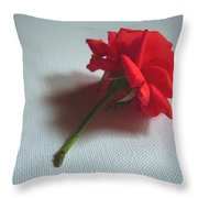 Red Rose Plucked Throw Pillow
