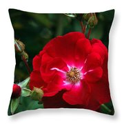 Red Rose With Buds Throw Pillow
