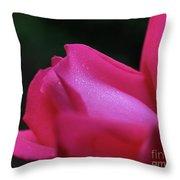 Red Rosebud Raindrops Throw Pillow