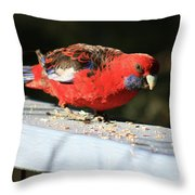 Red Rosella Throw Pillow