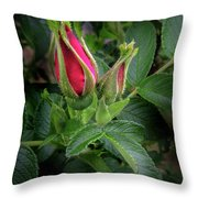 Red Rugosia Bud Throw Pillow