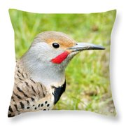 Red-shafted Indeed Throw Pillow