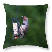 Red-shafted Northern Flicker On Suet Throw Pillow