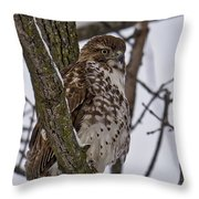 Red Shouldered Hawk - Madison - Wisconsin Throw Pillow