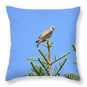Red-shouldered Perch Throw Pillow
