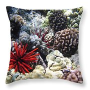 Red Slate Pencil Urchin Throw Pillow