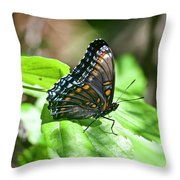 Red-spotted Purple 4172 Throw Pillow