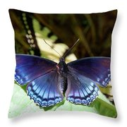 Red-spotted Purple 4257 Throw Pillow