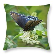 Red-spotted Purple Butterfly On Privet Flowers Throw Pillow