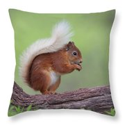 Red Squirrel Curved Log Throw Pillow