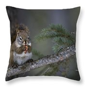 Red Squirrel Having Lunch Throw Pillow