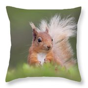 Red Squirrel In Vegetation Throw Pillow