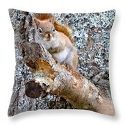 Red Squirrel Maine Throw Pillow