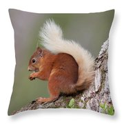 Red Squirrel On Tree Throw Pillow