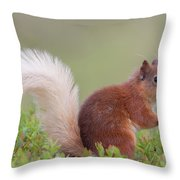 Red Squirrel Pauses Throw Pillow