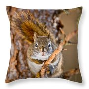 Red Squirrel Pictures 144 Throw Pillow