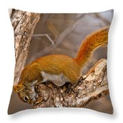 Red Squirrel Pictures 145 Throw Pillow