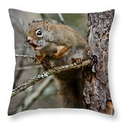 Red Squirrel Pictures 161 Throw Pillow