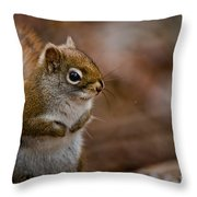 Red Squirrel Pictures 170 Throw Pillow