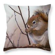 Red Squirrel - Sciurus Vulgaris Throw Pillow