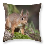 Red Squirrel - Scottish Highlands   #23 Throw Pillow