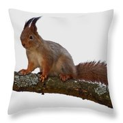 Red Squirrel Transparent Throw Pillow