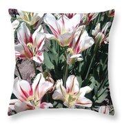 Red Stripe Tulips Throw Pillow