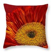 Red Sunflower Viii Throw Pillow