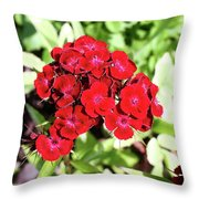 Red Sweet William Throw Pillow
