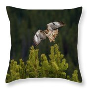 Red-tail Flight At Sunset Throw Pillow