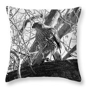 Red Tail Hawk In Black And White Throw Pillow by Deleas Kilgore