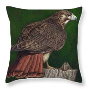 Red Tail Hawk Throw Pillow by Pat Erickson
