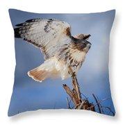 Red Tail Hawk Perch Throw Pillow