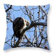 Red Tail IIi Throw Pillow