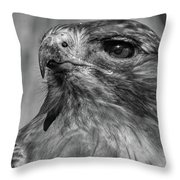 Red-tailed Hawk 2 Throw Pillow