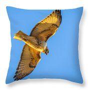Red Tailed Hawk II Throw Pillow