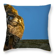 Red Tailed Hawk  IIi  Throw Pillow
