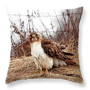 Red Tailed Hawk In The Field Throw Pillow
