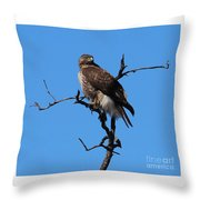 Red Tailed Hawk Throw Pillow by Kathy DesJardins
