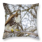Red Tailed Hawk,  Throw Pillow