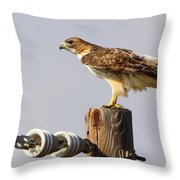 Red Tailed Hawk Perched Throw Pillow
