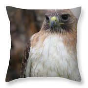 Red-tailed Hawks Throw Pillow