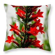 Red Texas Plume Flowers Throw Pillow
